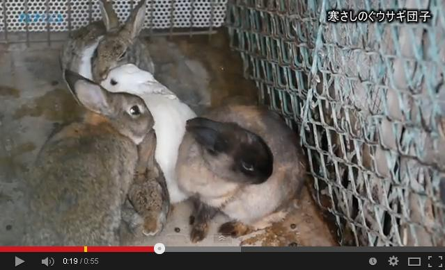 Some snuggly bunnies to warm your heart and soul this winter【Video】