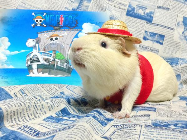 Cosplaying guinea pigs are the cutest thing you'll see this week! 【Photos】