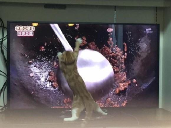 cat cooking 4