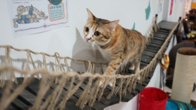 Calling all Cat Lovers: Did you know that Singapore has a 'Cat Museum'?