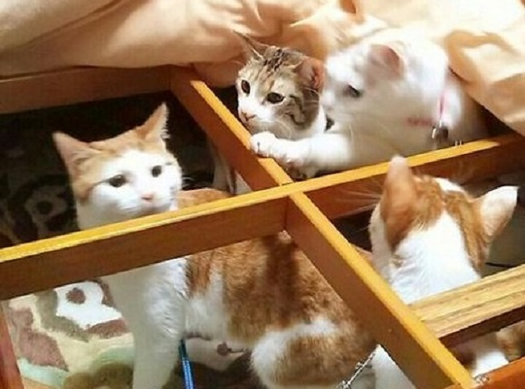 CATastrophe! Mass feline pandemonium ensues after owner strips futon off kotatsu