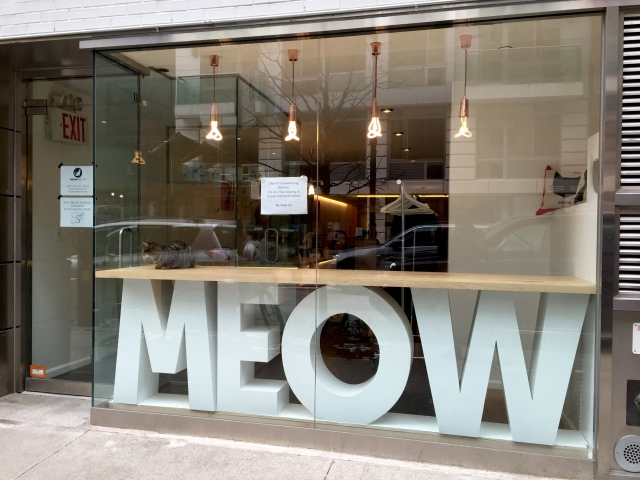 Taking a page from Japan, Meow Parlour, KittyKind team up for NYC's first cat cafe