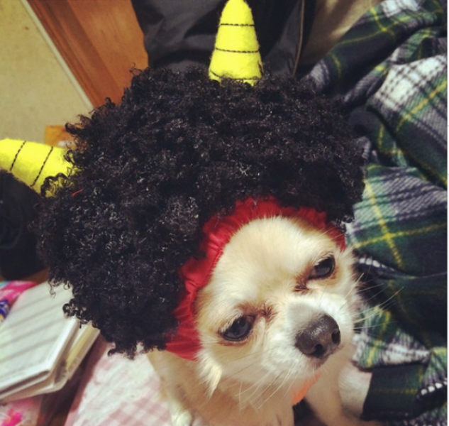 """Dogs out! Luck In!"" These cosplaying pooches are the cutest Setsubun ""oni"" you'll ever see"