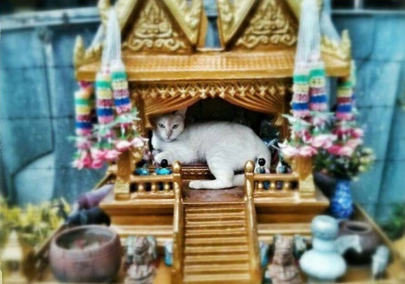 spirit cat 1