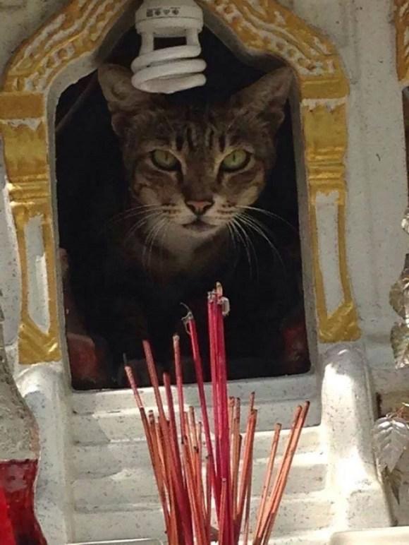 spirit cat 2