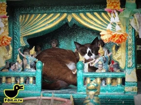 spirit cat 3