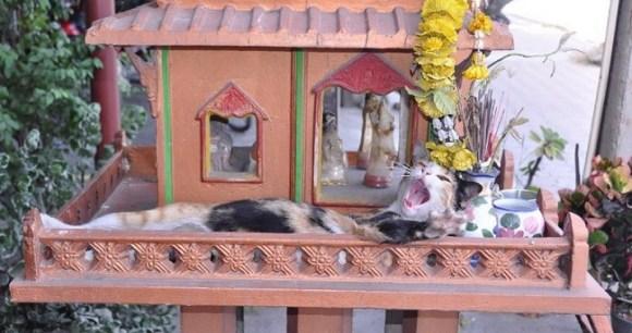 spirit cat 6