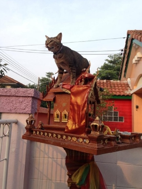 spirit cat 8