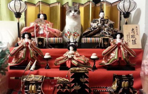 It's not just Girls' Day! Cats enjoy Hina Matsuri, look just purr-fect posing with dolls