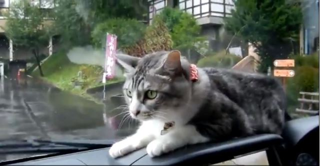 【Monday Kickstart】Silly kitty versus windshield wipers will rid you of your case of the Mondays