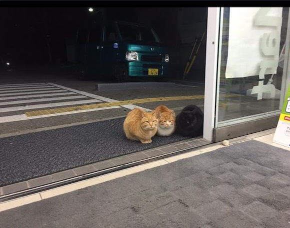 Cats sitting politely outside Japanese convenience stores restore our faith in felines