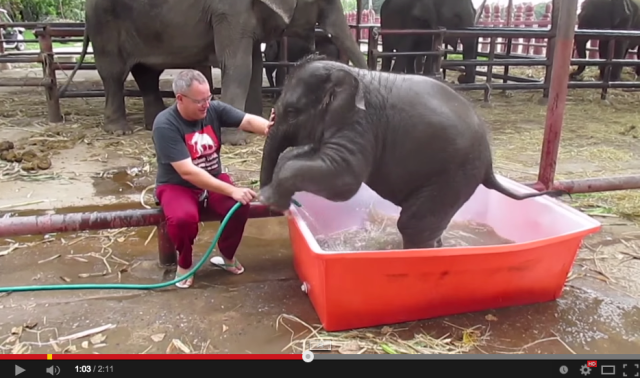 Baby elephants bathing are super cute, but not all elephants are quite so lucky