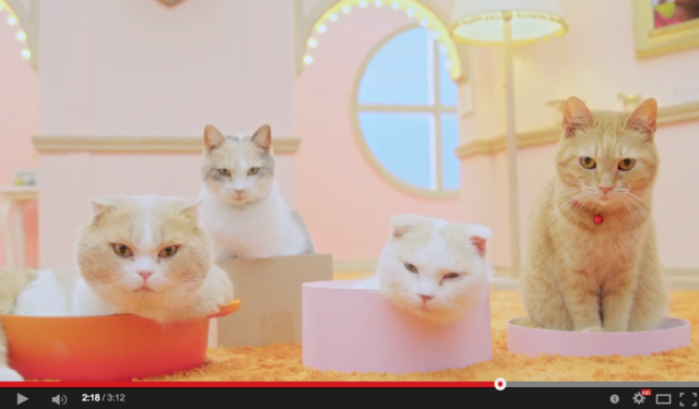 "This adorable cat commercial answers the question: ""What would a cat conversation sound like?"""