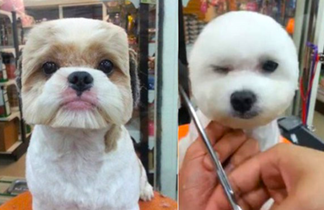 What? Never seen a dog with a perfectly round or square face before? 【Pics】