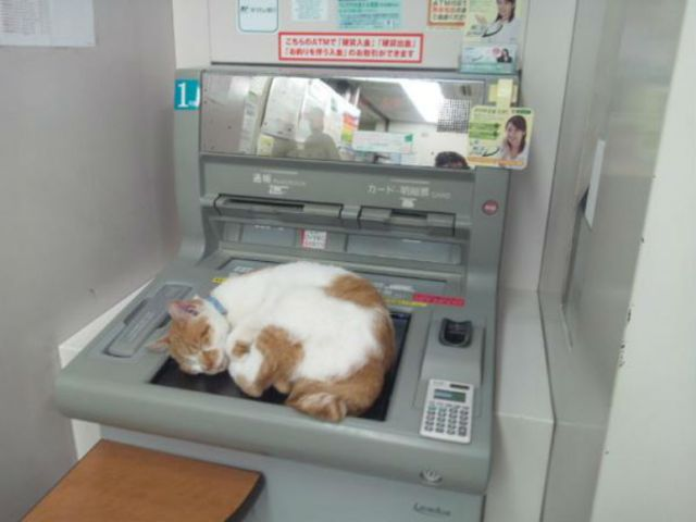 Next time you head to the ATM, don't forget to withdraw some…cats