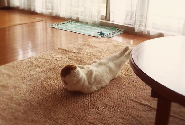 Get inspired by this cat's early morning workout!