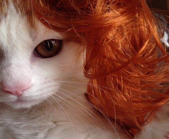 Cat transforms into beautiful woman with the aid of a wig (and a little imagination!)