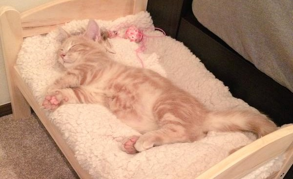 Treat your cat to this tiny IKEA bed and they might just love you for it 【Pics】