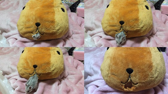 Monday Kickstart: Naughty hamster chews its way through a stuffed animal, into our hearts