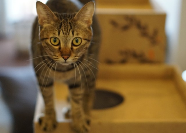 You should visit Osaka's first rescue cat cafe so I don't have to
