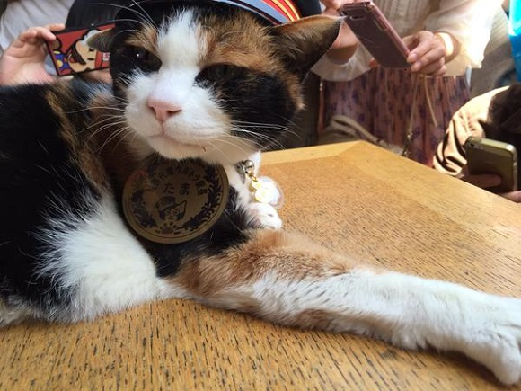 Happy 16th birthday to Stationmaster Tama, Wakayama's favorite feline