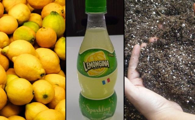 Lemon or dirt flavored? Lemongina is the blue dress of the soft drink world 【Taste Test】