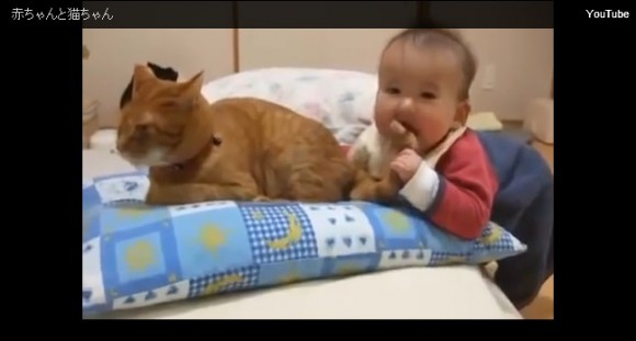 Baby innocently chomps and yanks on kitty's tail, good kitty keeps his cool 【Video】