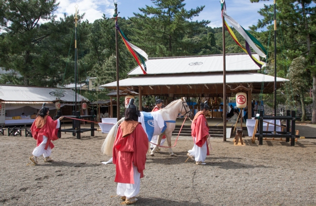 The Steeds of the Gods: The Shinto horses that no mortal may ride