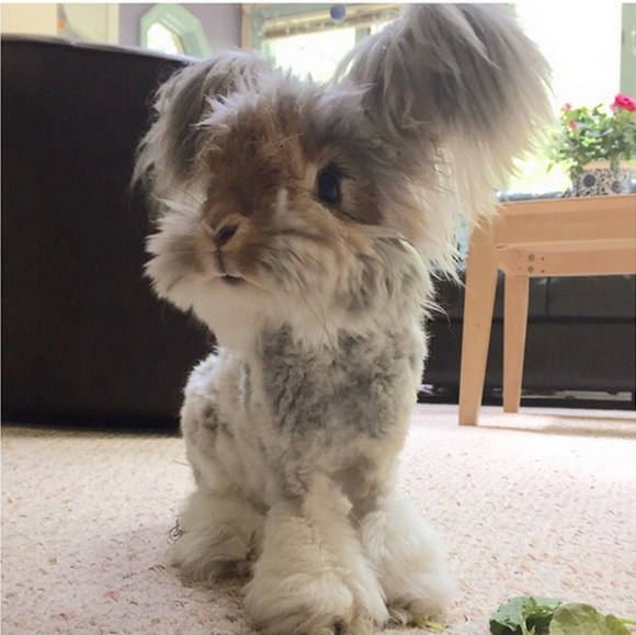 """Wally the bunny with """"angel wings"""" is here to spread cuteness, joy, and lots of fluff!【Photos】"""
