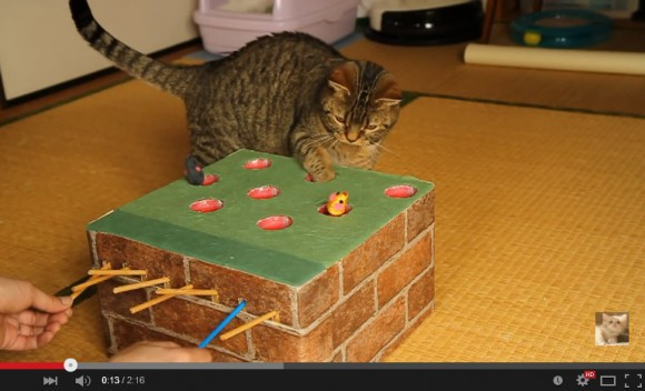 Cat owner crafts elaborate whack-a-mole game to amuse mouse-hungry pussies