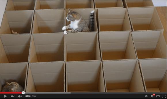 cat maze 1