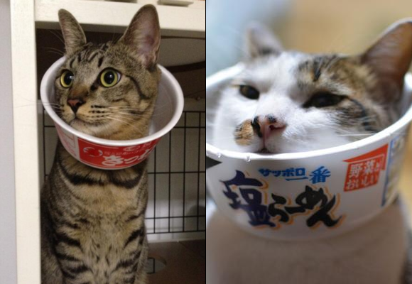 The latest in Japanese pet fashion: wearing an instant ramen bowl as a pet cone
