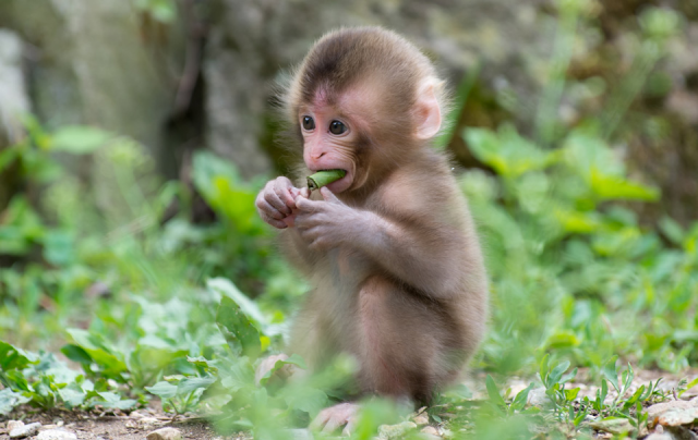 Monkey princess? Debate erupts over Japanese zoo naming baby macaque after new British princess