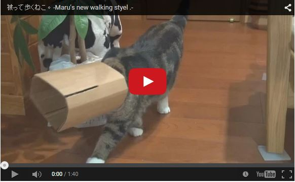 Kitties take notice: Maru the cat shows off his new, trendy walking style with cardboard box