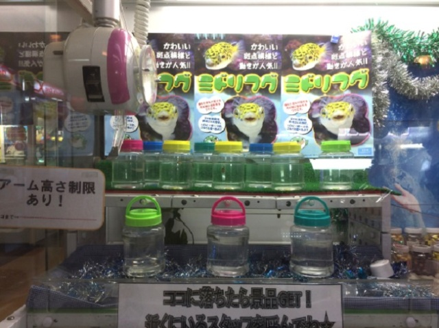 The next fad for UFO catcher prizes: tiny pufferfish!