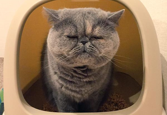 Nike the sleepy pooping cat reminds us all to enjoy life's little pleasures 【Pics】