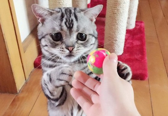 Luhu – the little cat who always looks sad 【Photos】