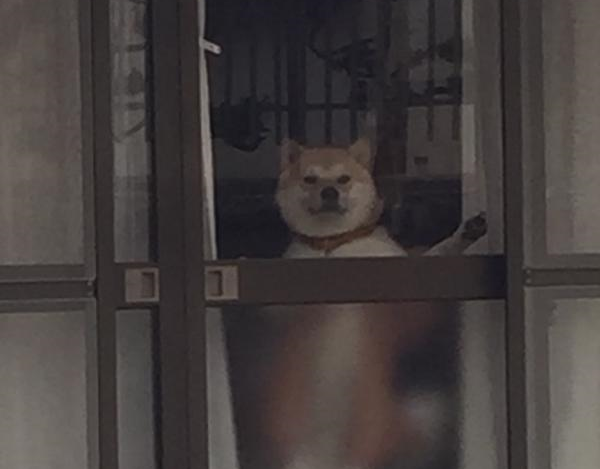 Japanese dog accidentally reveals his secret superpower! Oops, now it's on the Internet