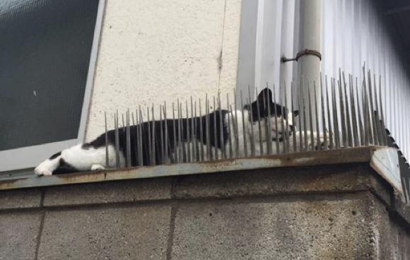 Did security spikes defeat this cat, or did the cat defeat them?