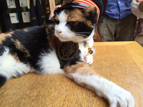 Rest in peace, Tama – Japan's stationmaster cat passes away at 16, company funeral to be held