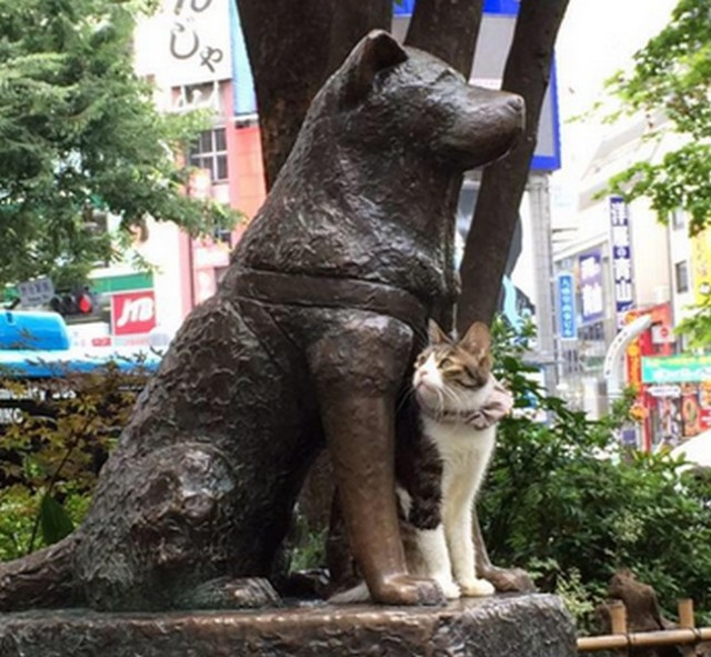 Shibuya's Hachiko has a new feline pal, and they look absolutely adorable together!