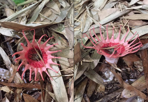 Creepy mushroom freaks out Japanese Twitter, ends up being an incredibly rare discovery