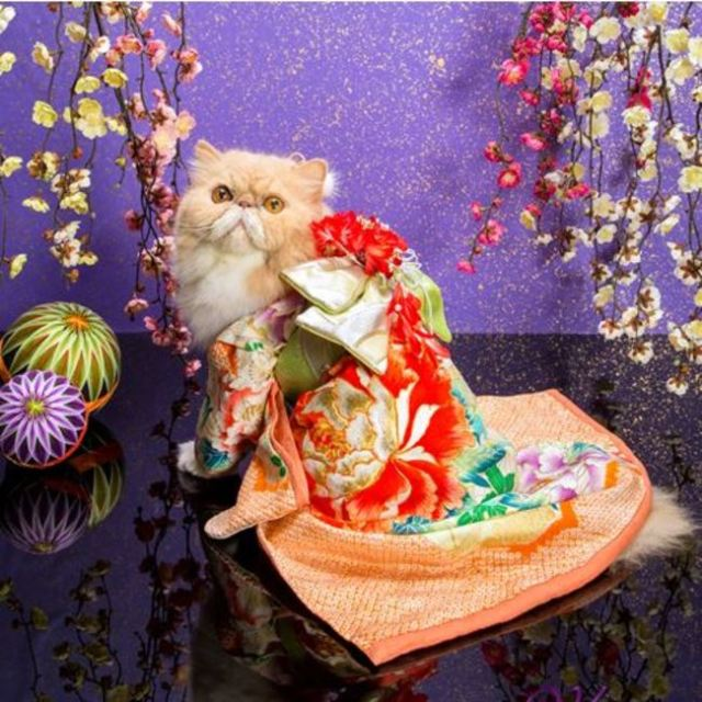 Welcome to the world of cats in kimonos