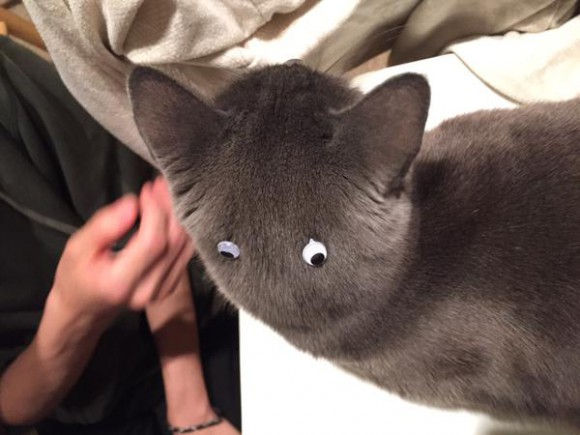 Totoro, is that you? Stick-on googly eyes plus kitty equals hours of fuzzy fun!