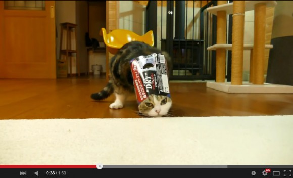 Maru the celebricat is done playing with boxes, now wants to become a box himself