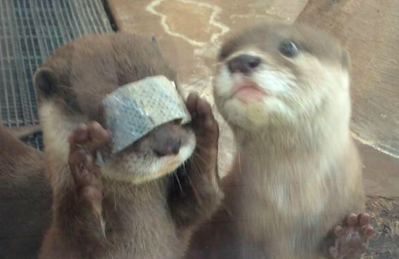 Otter covers itself with dead flesh, is somehow still cute
