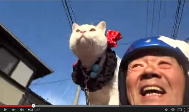 This cat and old guy pair go motorcycling together, are incredibly adorable
