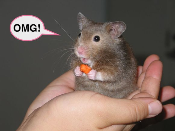 1024px-Hamster_in_hand