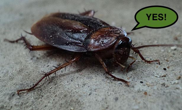 Tokuyama Zoo celebrates summer with Cockroach Fest!