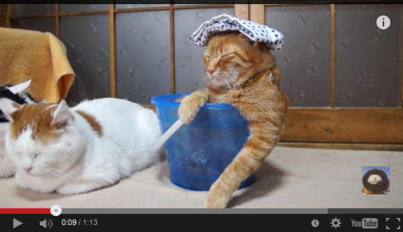 Adorable cat delivers daily dose of cute, appears to be enjoying a hot bath 【Monday Kickstart】